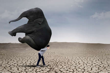 heavy risk: Young businessman lifting big elephant on dry ground