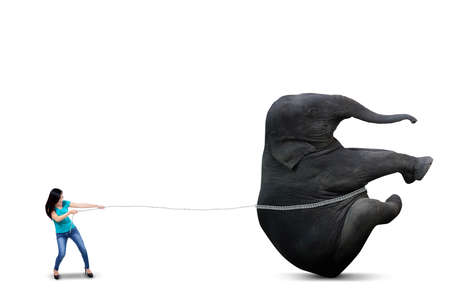 Beautiful asian woman is pulling big elephant, isolated on white background photo