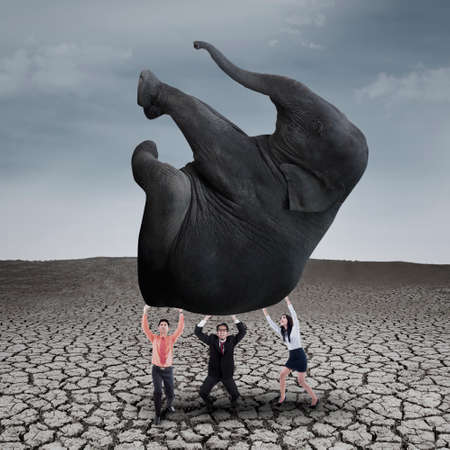 Business teamwork is lifting elephant on dry ground with grey sky photo