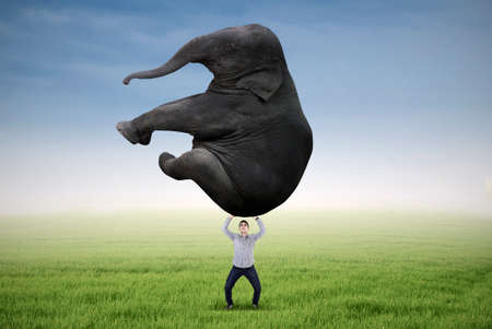 Asian man is lifting heavy elephant on the meadow photo