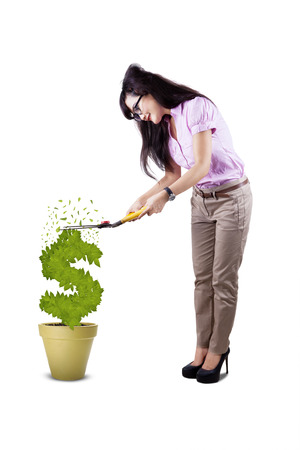 growing money: Young attractive businesswoman cutting plant in shape of dollar