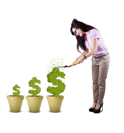 save tree: Young attractive businesswoman cutting plant in shape of dollar