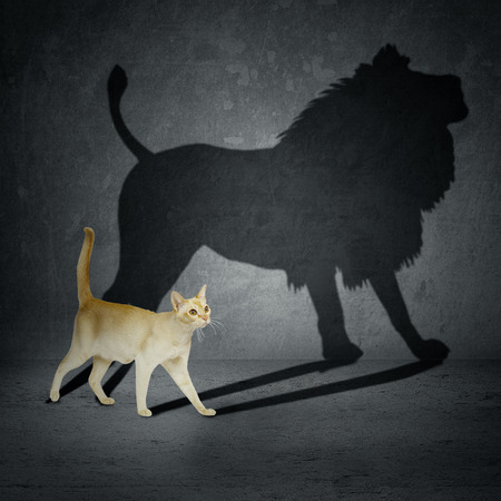 illusions: Cat with lion shadow on the wall