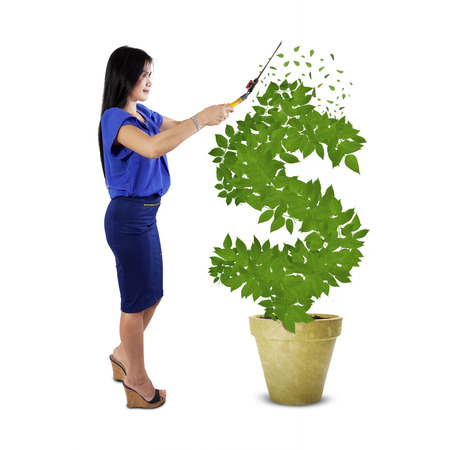 Portrait of businesswoman using a scissors to keep the money tree growth photo