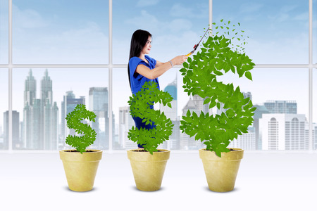 Business management concept with businesswoman using a scissors to cut and manage the leaves of money tree photo