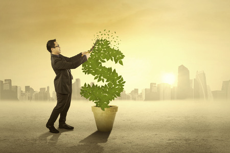 Business person using a scissors to manage the leaves of money tree photo