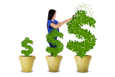 maintaining: Young woman using a scissors for maintaining the growth of money tree, isolated on white