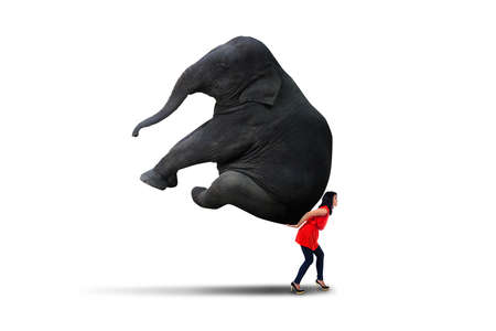 indian animal: Young asian woman is carrying big elephant, isolated on white background