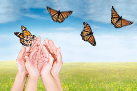 releasing: Close up of people hands release butterflies on the meadow at springtime