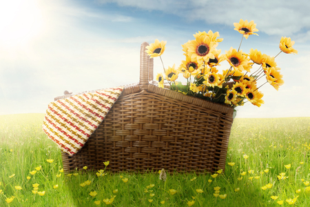 garden lawn: Image of a picnic basket with fabric and yellow sunflowers on the meadow at springtime
