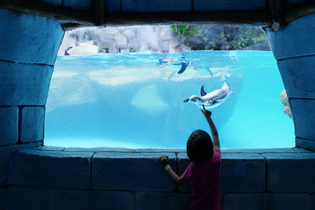 swimming silhouette: Silhouette of little girl watching penguin swimming inside an aquarium Stock Photo