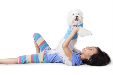 maltese dog: Image of a little girl playing with a maltese dog while lying in the studio