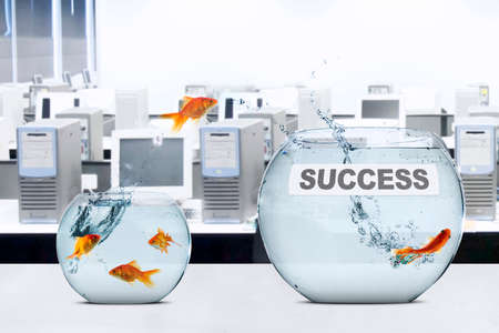 goldfish jump: Picture of golden fish jumps to fishbowl with success text on the table, concept of success in new place