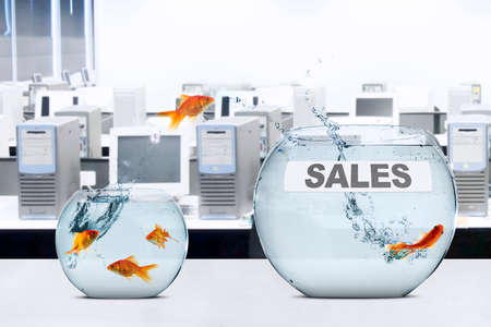 goldfish jump: Picture of golden fish moving to larger aquarium with sales word, shot in office Stock Photo