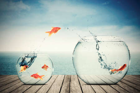 Picture of goldfish moving to better place in the transparent aquarium Stock Photo