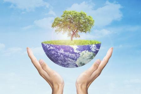 地球概念を保存します。木で地球を保持している人間の手
