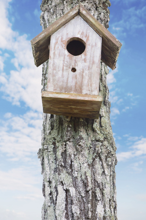 Image of old birdhouse hanging on the stem with blue sky in the background