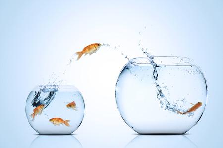 photo de poissons d & # 39 ; or se déplaçant à un meilleur magasin dans l & # 39 ; aquarium peu profond