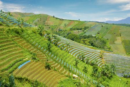 Aerial view of terraced fields of leek under blue sky in Majalengka, Indonesia