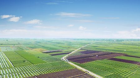 Beautiful scenery of red onion farmland with green leaves in Brebes. Indonesia Stock Photo