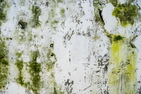 Closeup of dirty wall with green fungus of an old house