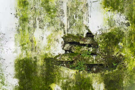 Closeup of cracked wall with green fungus of an old house