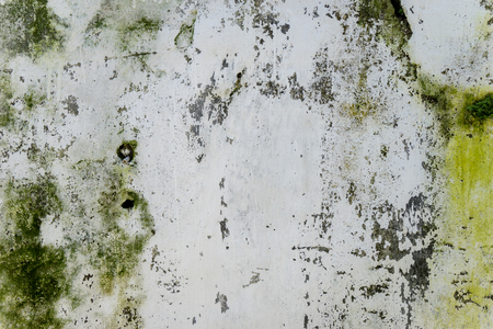Image of green fungus on wall of an old house Stock Photo