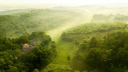 Beautiful aerial view of palm oil plantation and rice field on misty morning at Cikidang, Sukabumi, West Java, Indonesia