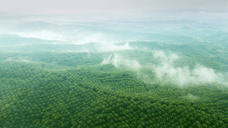 Beautiful aerial view of green palm oil plantation on misty morning at Cikidang, Sukabumi, West Java, Indonesia Stock fotó