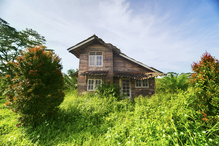 Image of neglected house overgrown with bushes. shot in the forest Stock Photo
