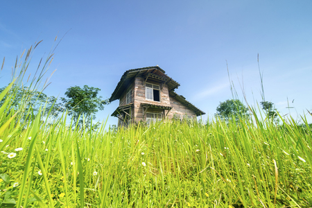 Low angle view of a neglected wooden house in disrepair overgrown with bushes Stock Photo