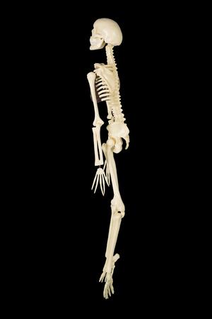 Side view of human skull model in the studio with dark background 版權商用圖片