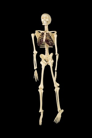 Full length of human skeleton in the studio with dark background