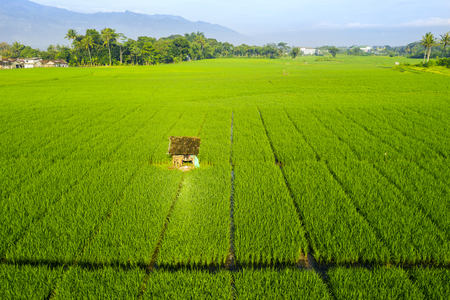 Aerial view of ugly hut at middle of green rice field in Semarang, Indonesia Stockfoto