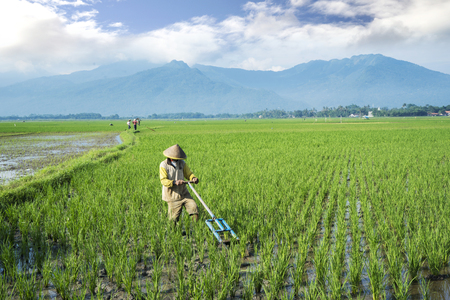 Bali - Indonesia. April 05, 2019: Male farmer harrowing rice fields by using traditional tool in Bali, Indonesia
