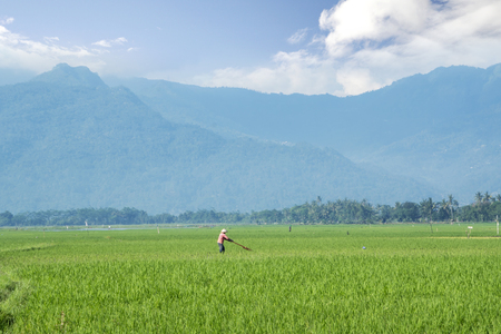 Bali - Indonesia. April 05, 2019: Image of farmer working on farmland with beautiful mountain background in Bali, Indonesia