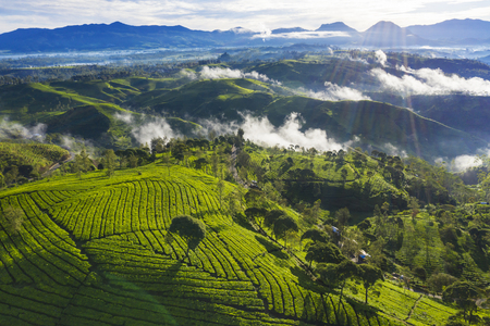 Beautiful landscape of tea plantation with mist at morning time in Bandung, Indonesia