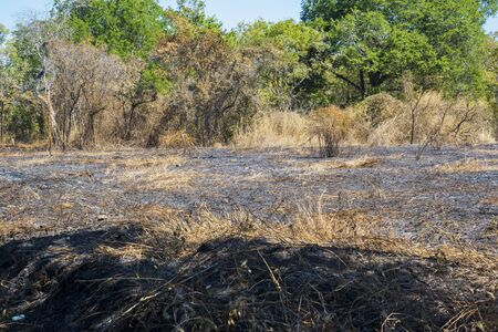 Image of dry grassland with burnt trees during dry season in Baluran National Park at East Java, Indonesia