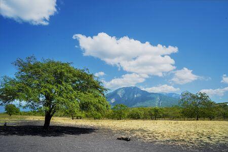 Beautiful scenery of Baluran National Park with Mount Baluran background in Situbondo, East Java, Indonesia