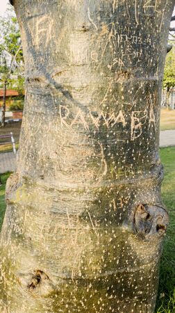 Close up of scrawled and romantic symbol engraving on Baobab trunk