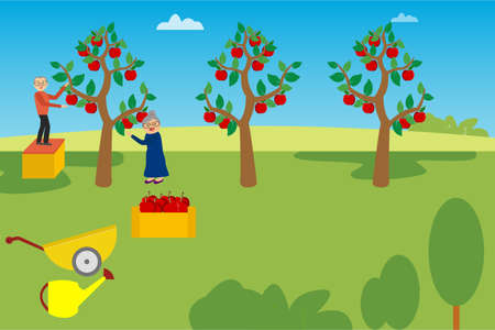 Agriculture vector concept: old couple harvesting apples happily on their garden