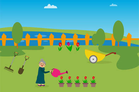 Gardening vector concept: old woman watering pots of roses happily at the garden Vettoriali