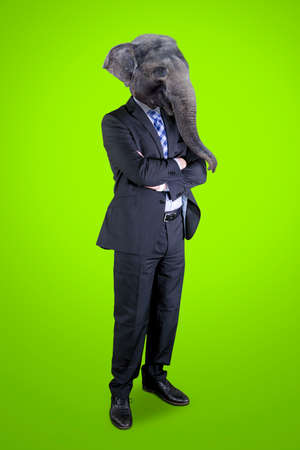 Contemporary art collage concept. Picture of confident male manager with head of elephant standing in the studio with green screen background