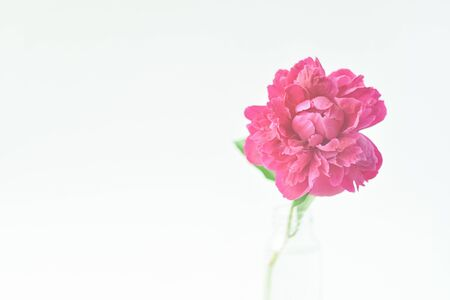 Red peony flower in a glass vase on a white isolated background. Fresh flowers . Selective focus. Horizontal frame. Imagens - 128903328