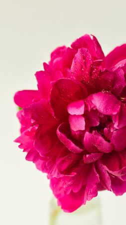 Red peony flower in a glass vase on a white isolated background. Fresh flowers . Selective focus. Vertical frame Imagens - 128894764
