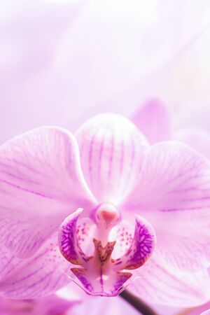 A flower of a magnificent pink orchid close up. Selective focus. Vertical frame. Fresh flowers natural background macro.