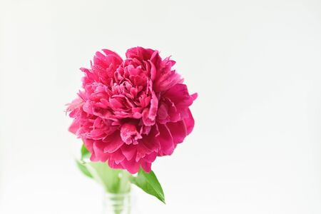 Red peony flower in a glass vase on a white isolated background. Fresh flowers . Selective focus. Horizontal frame. Imagens - 128891012