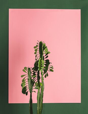 Tropical flower cactus plant on a background of green wall. Nature concept. Vertical frame