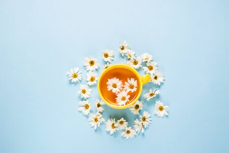 A cup of herbal chamomile tea on a blue background with spread flowers. Floral summer background. Flat layout top view