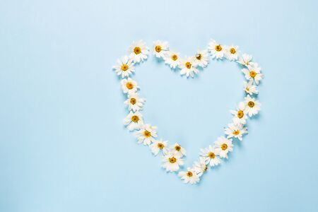 Chamomile or daisy flowers laid out in the shape of heart on a blue background. Health holiday concept